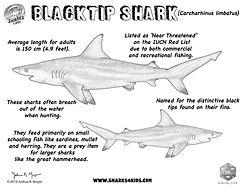 blacktipsharkFactslowREs.jpg