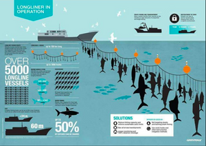 The impact of longlines Image: Greenpeace