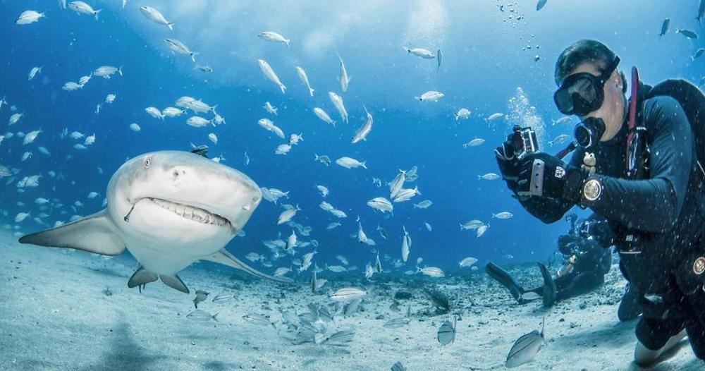 Tyler shark diving