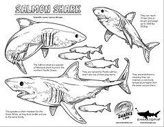 SalmonSharkSharks4Kids.jpg