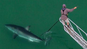 White Shark Science with Dr. Greg Skomal