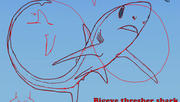 How to Draw a Thresher Shark with Dr. Julius Csotonyi