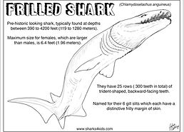 Sharks4Kids frilled shark.jpg