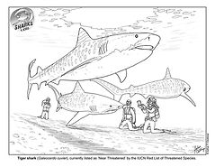 Tiger shark Diver Coloring Sheet low.jpg