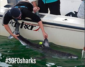 tag a shark.jpg