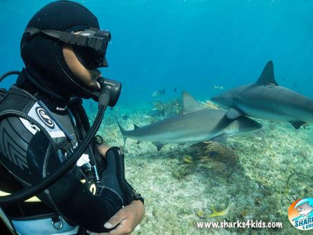 Meet Sharks4Kids FIN Tastic Allstar Billy