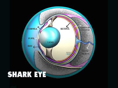 Sharks4Kids Sharkeye.jpg