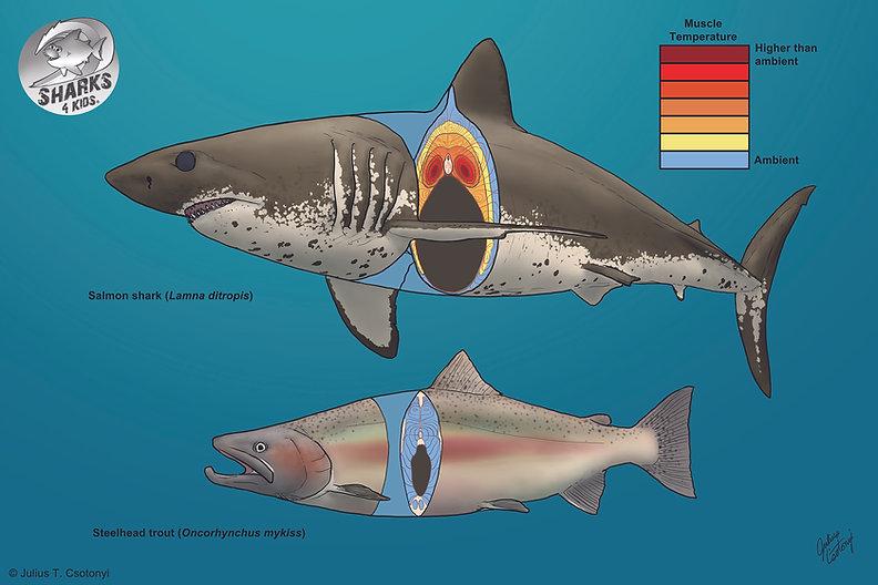 Thermo shark slide.jpg