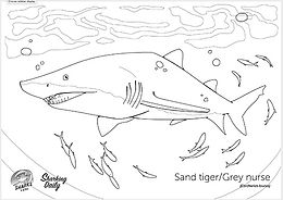 sand tiger coloring page.jpg