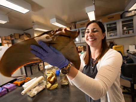 Shark Week: Meet Biologist Dr. Misty Paig-Tran