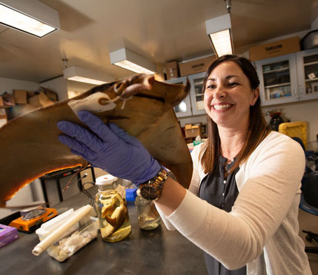 Shark Week: Meet Biologist Dr. Misty Paig-Tran