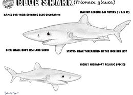 Blueshark Coloring Sheetlow.jpg
