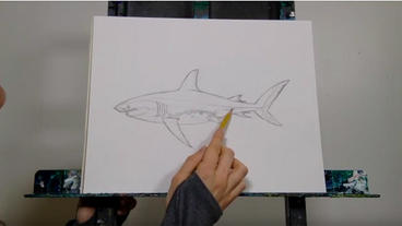 How to Draw a Great White Shark with Kelly Quinn