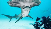 Filming Sharks with Filipe DeAndrade