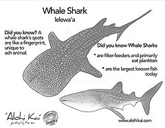 whale shark coloring page.jpg