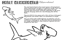 great hammerhead coloring sheet