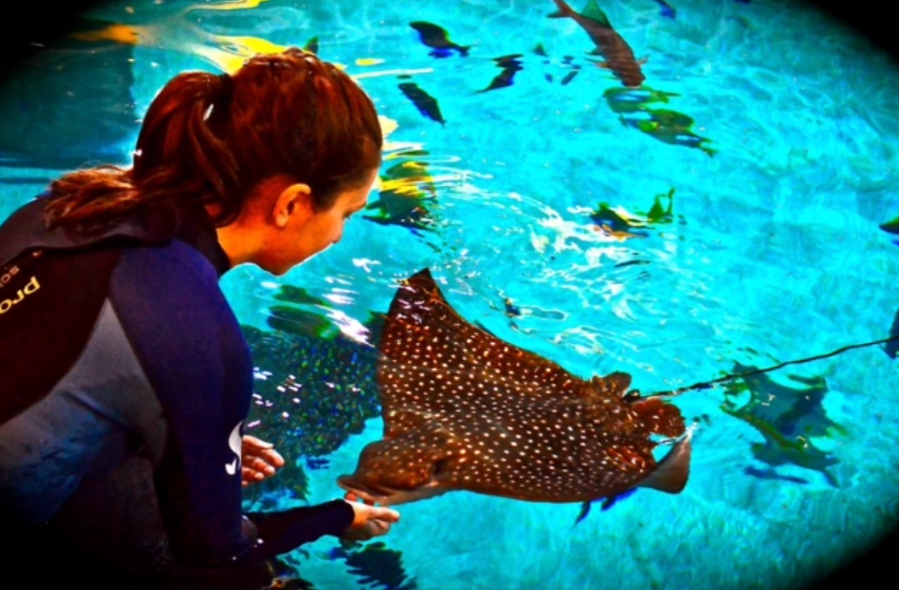 Mollie training a spotted eagle ray