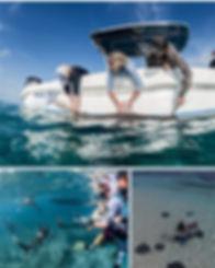 shark education 2.jpg