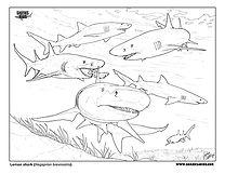 lemon shark coloring page low.jpg