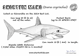 Mako shark fact sheet