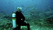 Bull Sharks of Fiji with Lindsay Graff