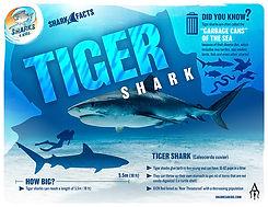 S4K_FactSheet_Tiger_V1 low.jpg