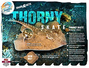 S4K_FactSheet_ThornySkate low .jpg
