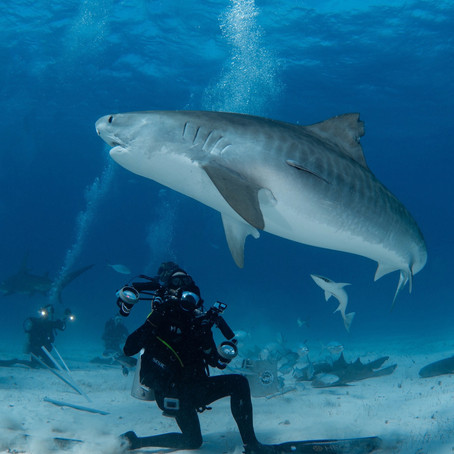 Meet Shark Eco Tour Owner & Photographer Ryan Walton