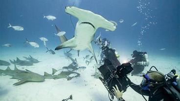 Filming Shark Week with Duncan Brake