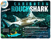 S4K_FactSheet_CaribbeanRoughshark low.jp