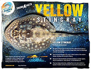 YellowStingray low_V1.jpg