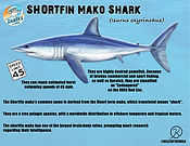 shortfin mako low .jpg