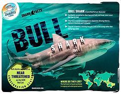 bull shark facts low.jpg