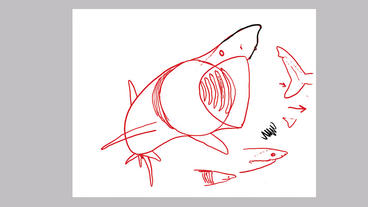 How to Draw a Basking Shark with Dr. Julius Csotonyi