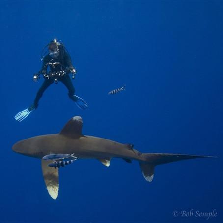 Meet Underwater Photographer Andy Murch