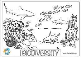 biodiversity coloring page.jpg