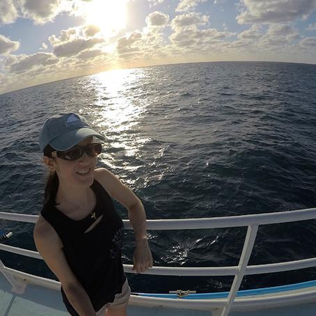 A Great White Shark Adventure