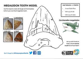 Meg Fossil Tooth Activity.jpg