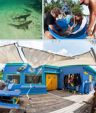 Shark Education 1.jpg