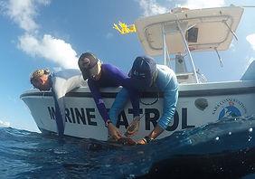 Jillian shark tagging.jpg