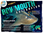BowmouthGuitarfish low_V1.jpg