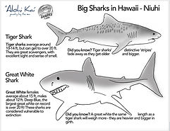 big sharks.jpg