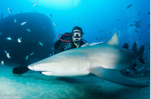Tyler diving with a lemon shark Credit: Jenny Hall