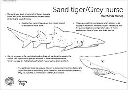 sand tiger facts.jpg
