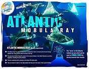 AtlanticMobulaRay lowV1.jpg
