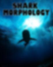 Sharkmorphologyactivity.jpg