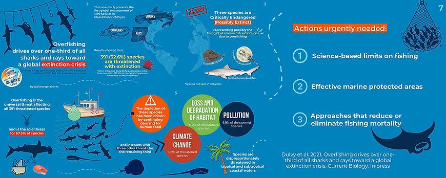 IUCN Red list shark update infographiclow.jpg