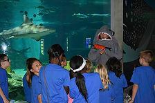 shark science educationn.jpg