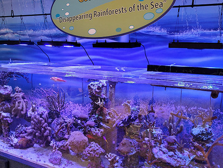 Visiting the Marine Science Center