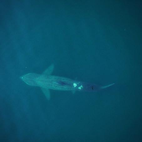 Shark Girl in a Whale World